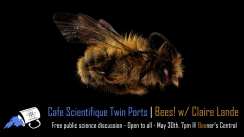 May 2019: Bees! - w/ Claire Lande